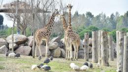 İzmir Doğal Yaşam Parkı Ziyaret Saatleri – Giriş Ücretleri